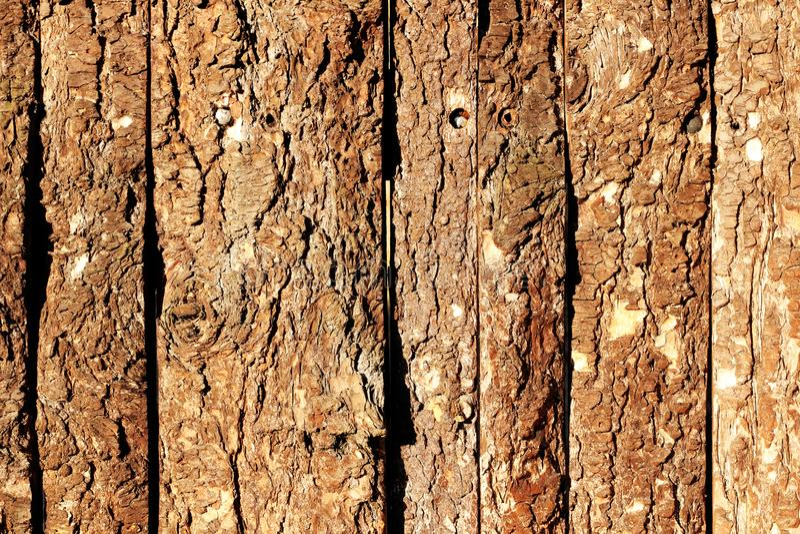 与老自然杉木吠声室外纹理的木门 库存图片