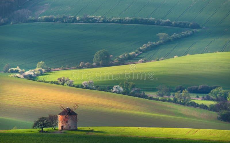 与老风车和白色开花的TreesnBeautiful日落的农村夏天风景在波浪的绿色的古老风车上 库存图片