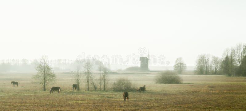 与老风车的有薄雾的早晨 免版税库存图片