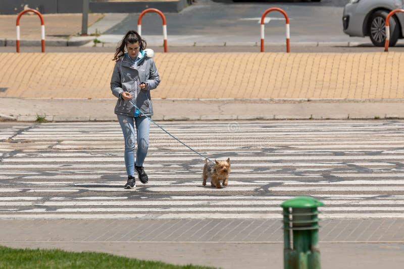 与耳机和穿过路的年轻女人听的音乐有他的狗的 图库摄影