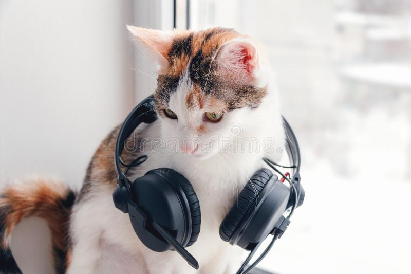 与耳机的一只猫在窗台 免版税库存图片