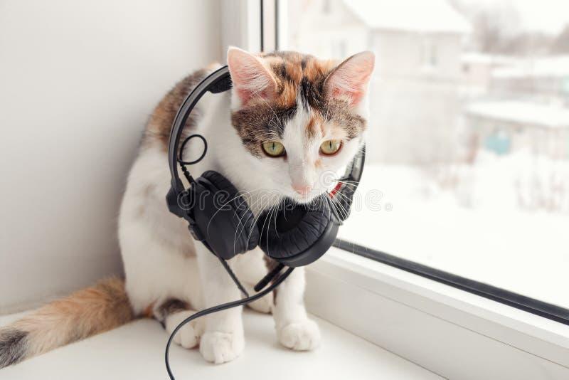 与耳机的一只猫在窗台 免版税图库摄影