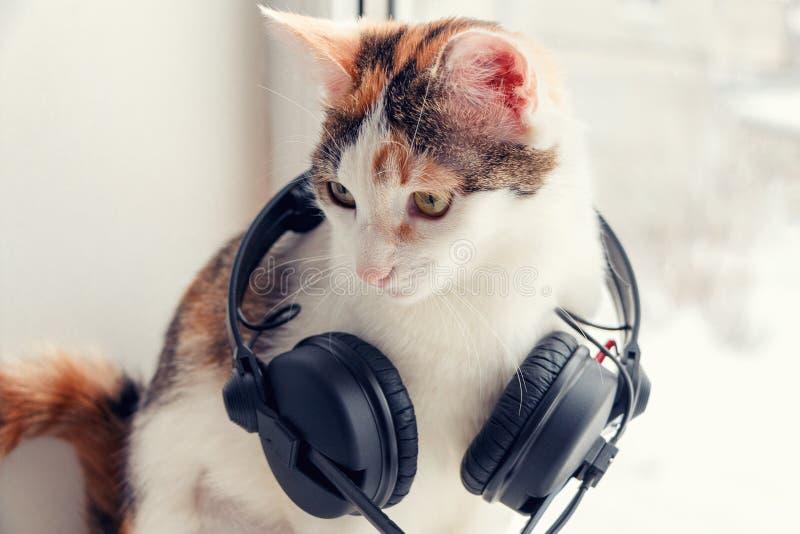 与耳机的一只猫在窗台 图库摄影