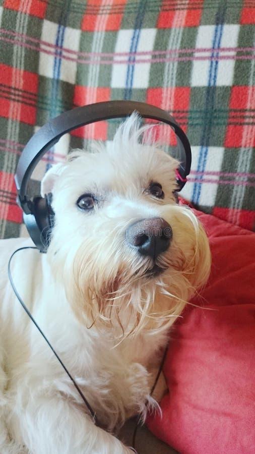 与耳机的狗 免版税库存照片