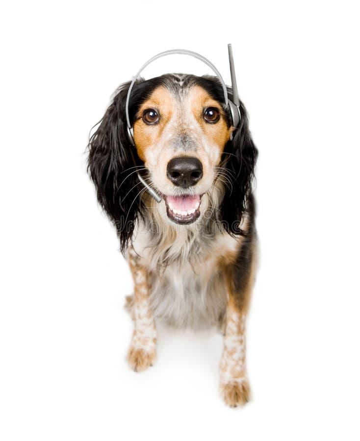 与耳机的狗 免版税库存图片