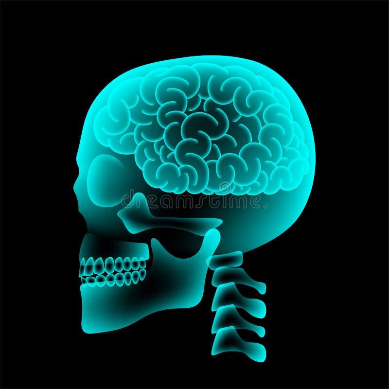 与脑子构思设计,侧视图例证的头骨X-射线 库存例证
