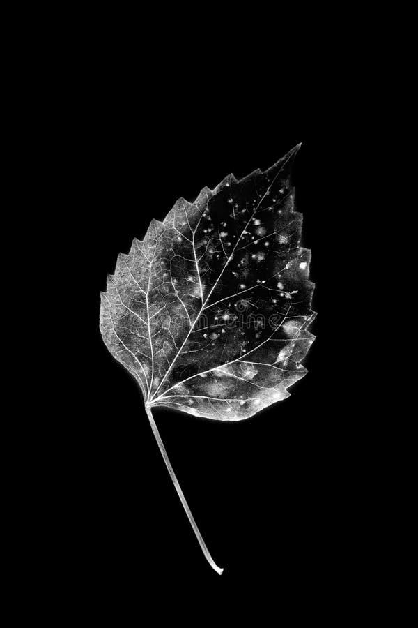 与腐烂的叶子的纹理 免版税库存照片