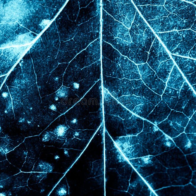 与腐烂的叶子的纹理 库存图片