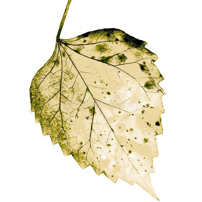 与腐烂的叶子的纹理 图库摄影