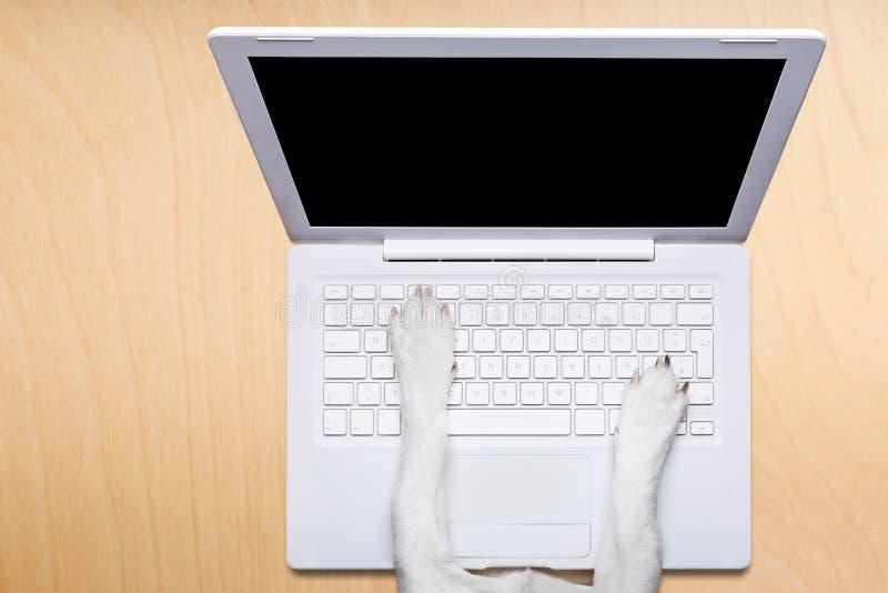 与膝上型计算机个人计算机计算机的办公室工作者狗在书桌桌上 库存照片
