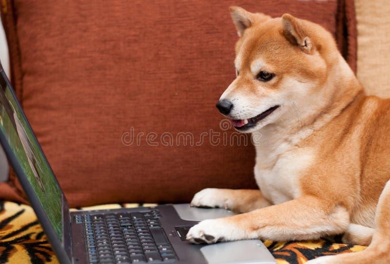 与膝上型计算机的狗 免版税库存图片