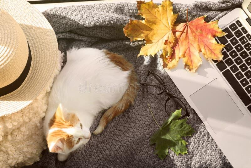 与膝上型计算机的逗人喜爱的小的小猫在格子花呢披肩在家 免版税图库摄影