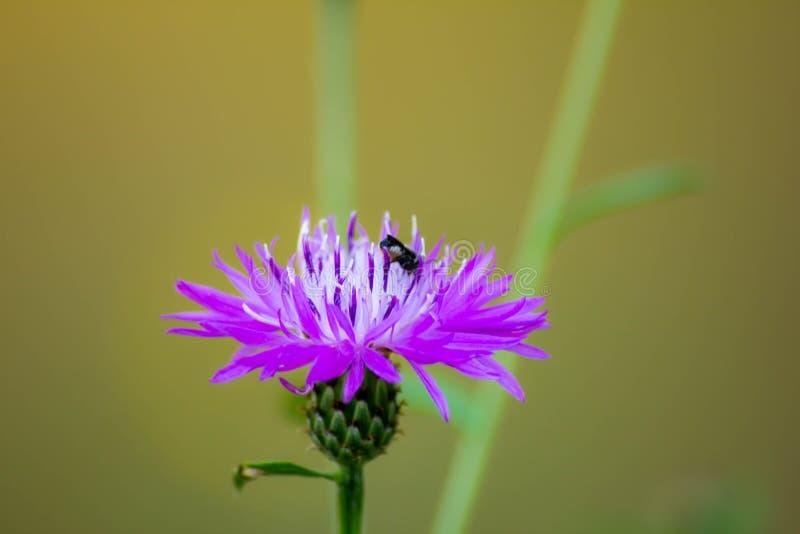 与自发增长的野花的被弄脏的背景 免版税库存照片
