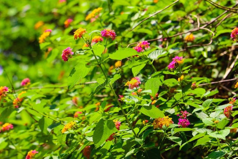 与自然叶子的美好的flowerls 库存图片