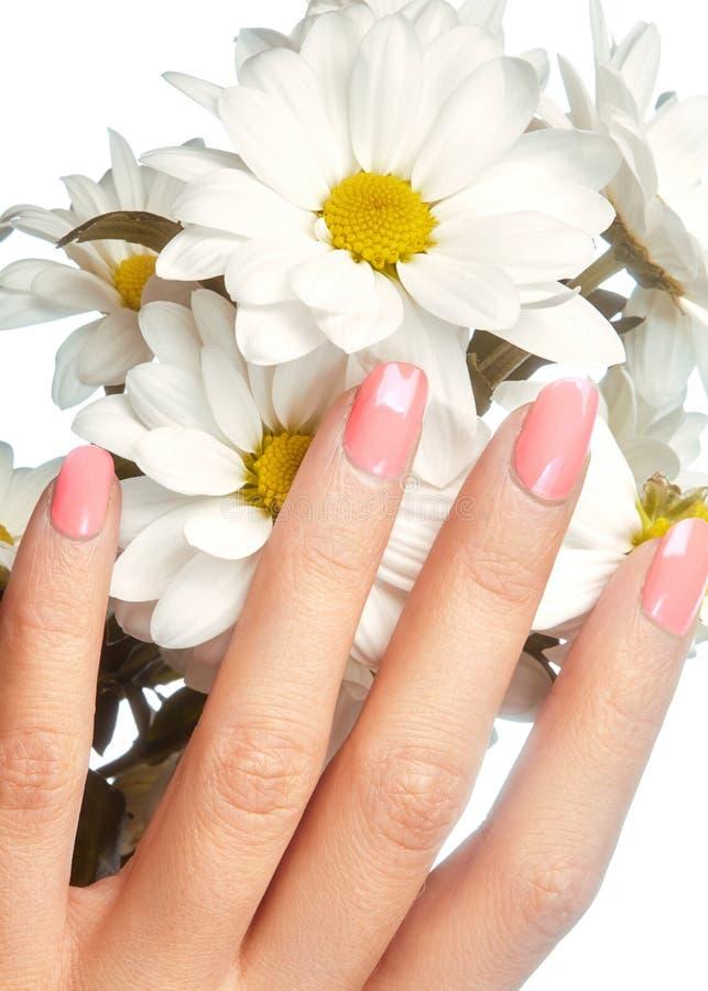 与自然指甲油的被修剪的钉子 与桃红色nailpolish的修指甲 时尚修指甲 发光的胶凝体亮漆 春天 库存照片