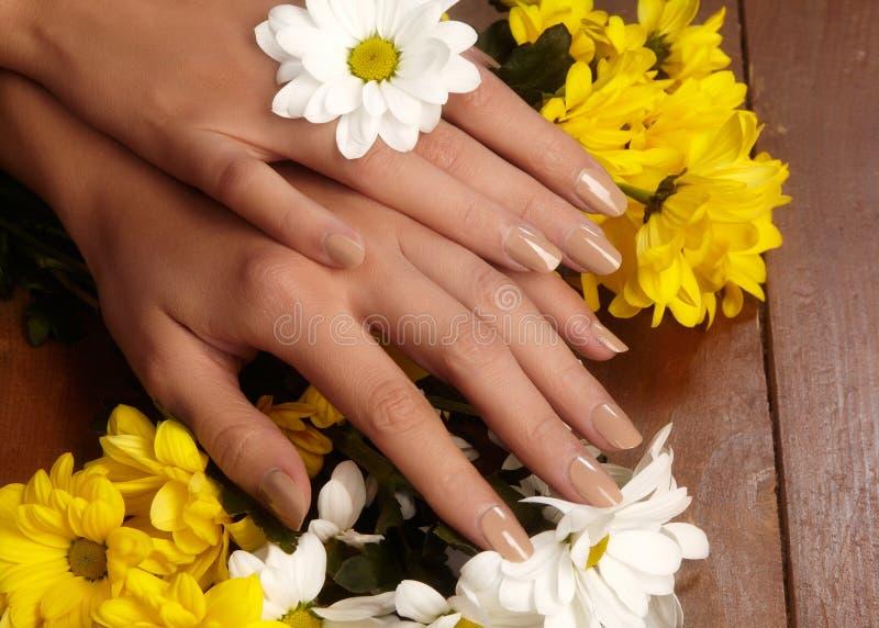 与自然指甲油的被修剪的钉子 与米黄nailpolish的修指甲 时尚修指甲 发光的胶凝体亮漆 春天 库存照片