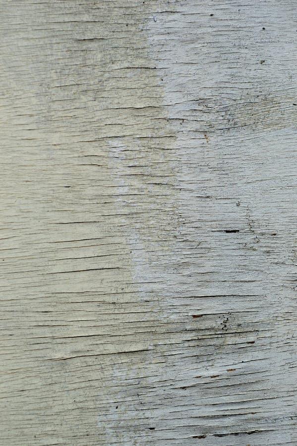 与自然木样式的木纹理 库存图片