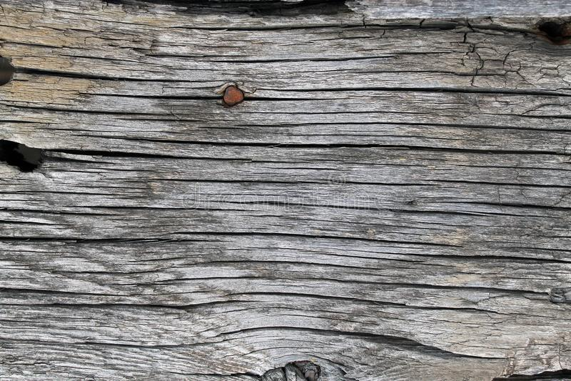 与自然样式的老木纹理 在树背景里面 老脏和被风化的灰色木墙壁板条 图库摄影