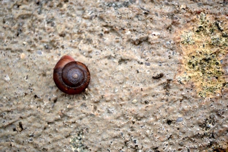 与自然石样式和蜗牛壳的石纹理 库存照片