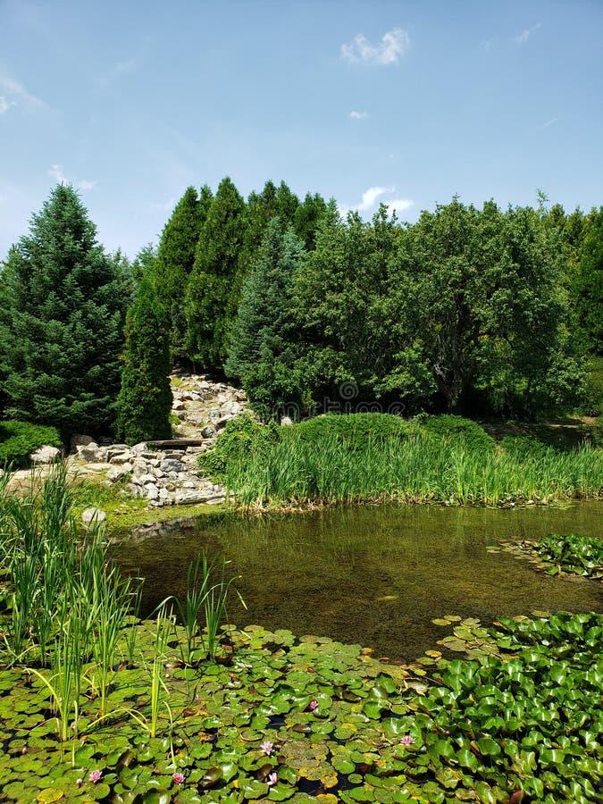 与自然绿色的湖混合  库存照片