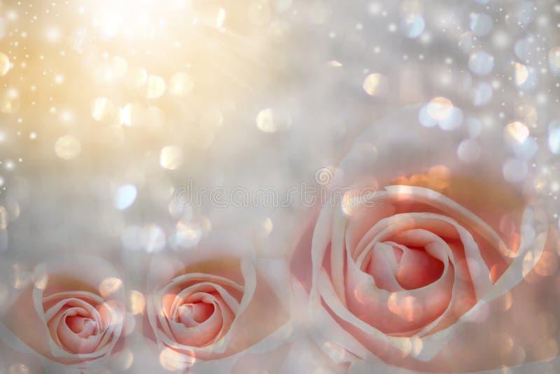 与自由空间的桃红色玫瑰花束 库存图片