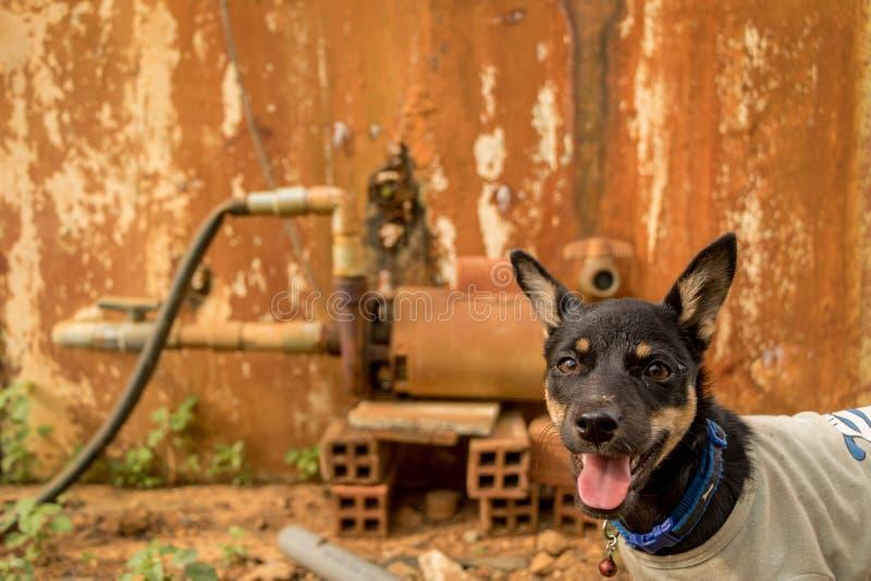 与舌头外的宠物佩带的T恤杉的愉快的小的小狗-与好奇面孔的狗-葡萄酒五颜六色的背景 免版税库存图片