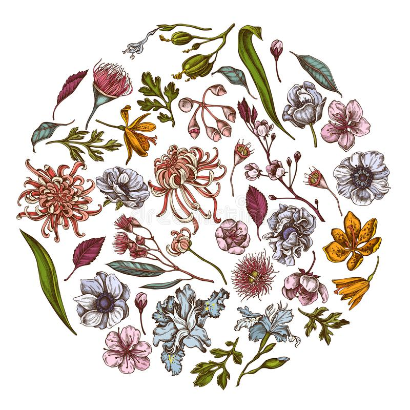 与色的日本菊花,黑莓百合,玉树花,银莲花属,虹膜japonica的圆的花卉设计 库存例证