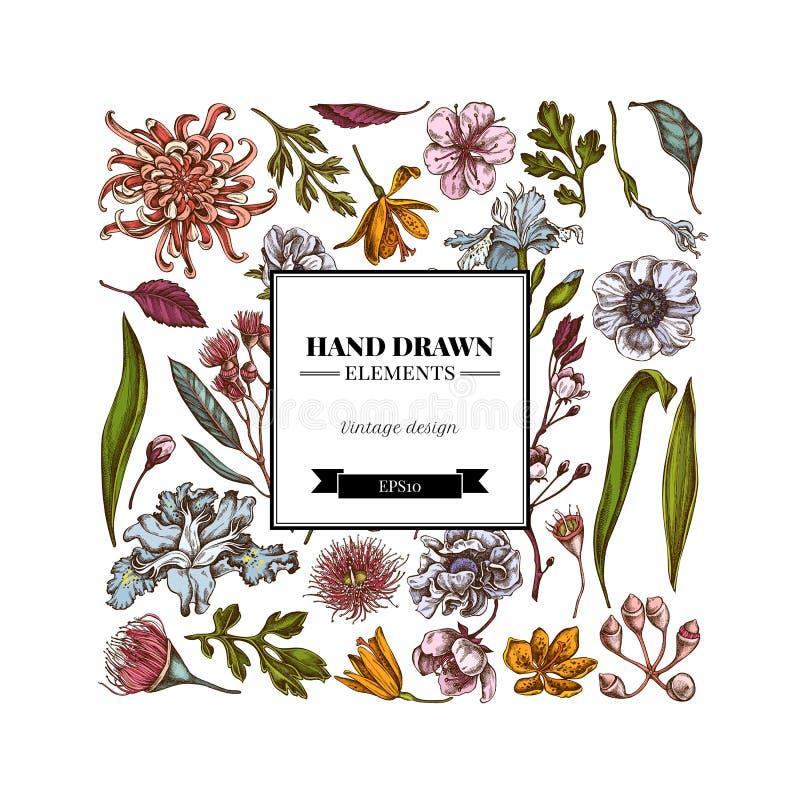 与色的日本菊花,黑莓百合,玉树花,银莲花属,虹膜japonica的正方形花卉设计 皇族释放例证