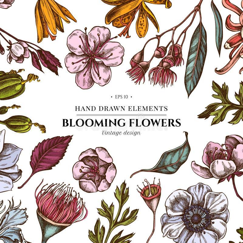 与色的日本菊花,黑莓百合,玉树花,银莲花属,虹膜japonica,佐仓的花卉设计 库存例证