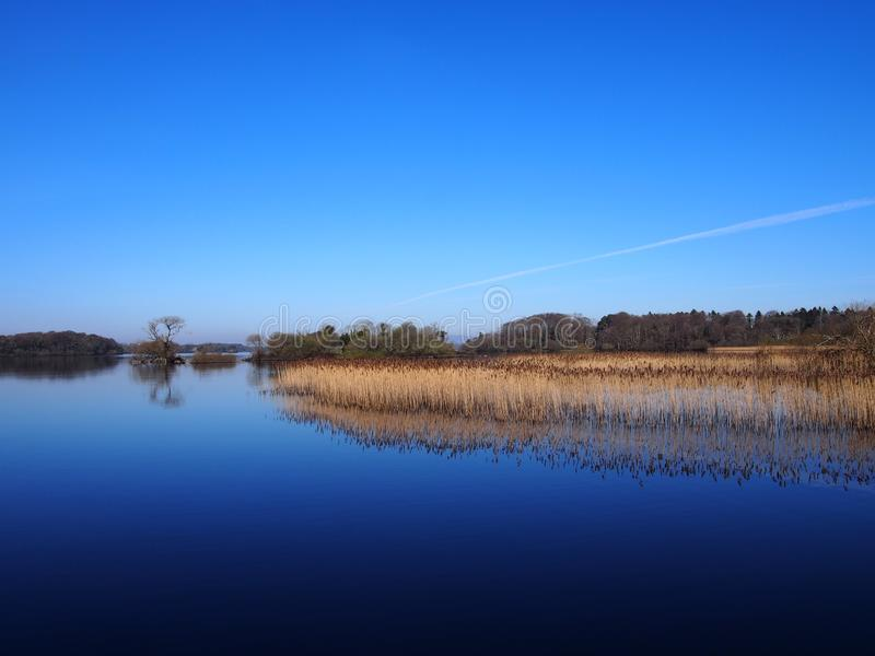与芦苇的蓝色湖反射 免版税图库摄影