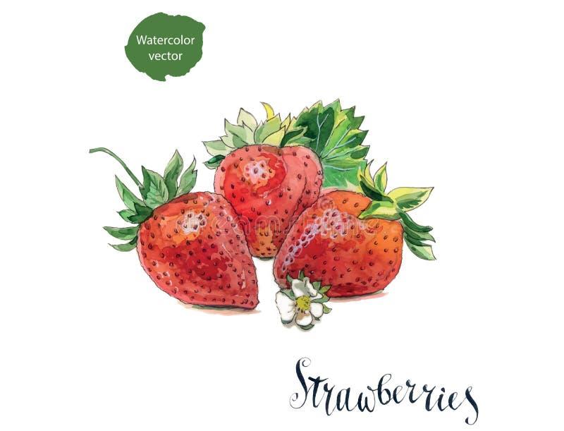 与花和叶子的3个新鲜的草莓 库存例证