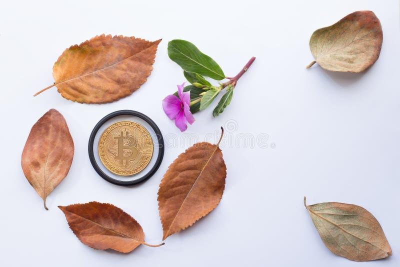 与花和叶子的Bitcoin 免版税图库摄影