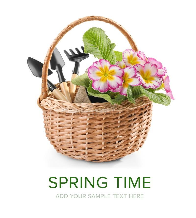 与花和园艺工具的柳条筐在白色背景 免版税图库摄影