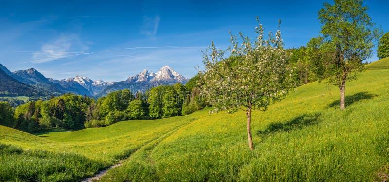 与花和开花的果树的象春天的高山山风景 免版税库存照片