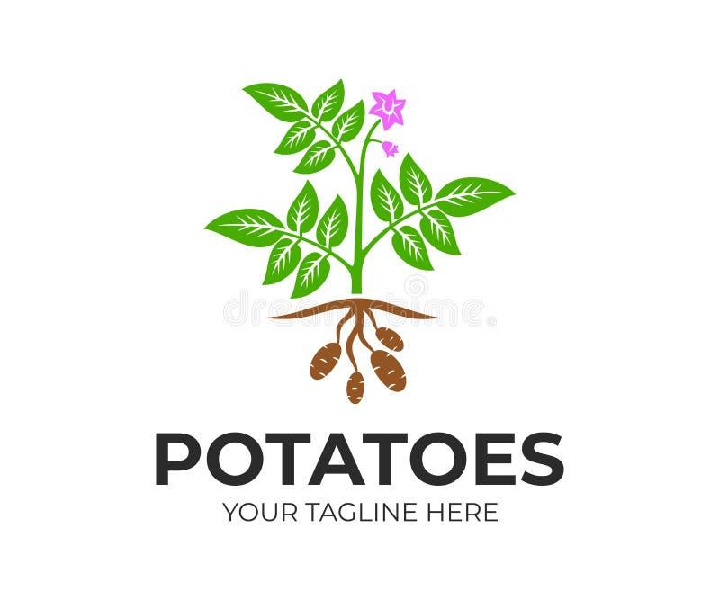 与花和果子,商标设计的农业植物土豆 有机和自然土豆植物和食物,土气或种田fie 皇族释放例证