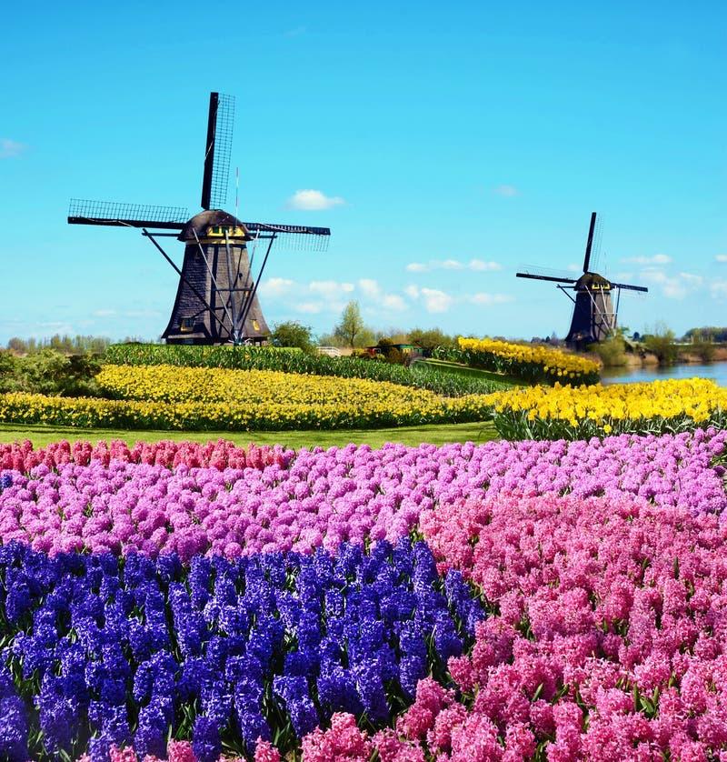 与花和样式的不可思议的春天风景在空中磨房 免版税库存图片