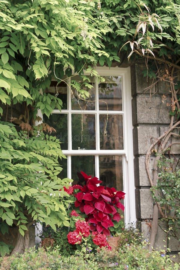 与花和植物的窗口 免版税库存照片