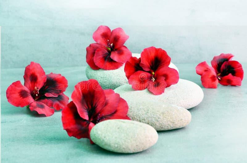 与花和禅宗石头的温泉概念 库存照片