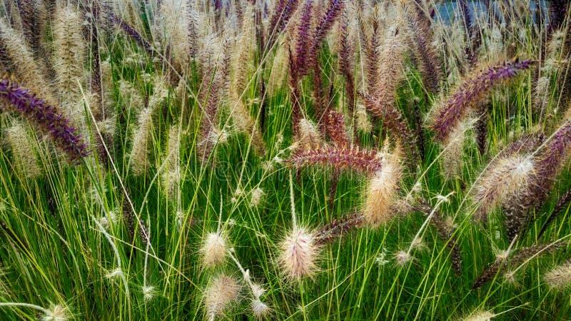 与花和种子的绿草 库存图片