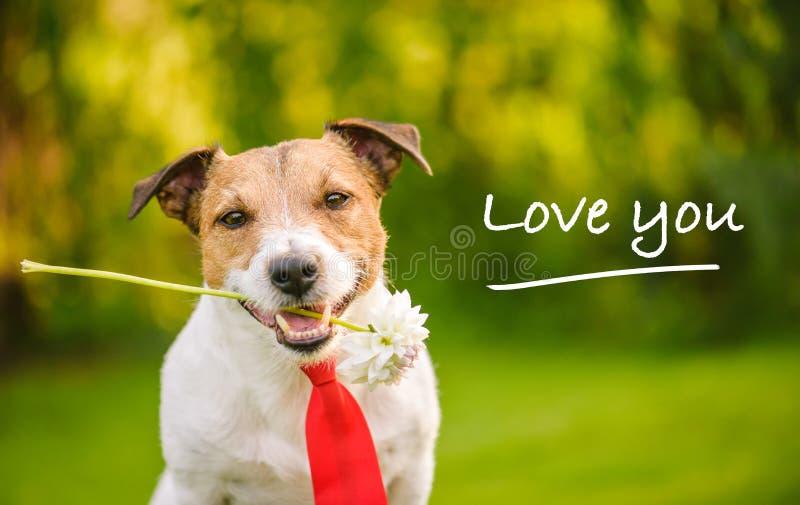 与花和红色领带的说可爱的狗'我爱你' 库存照片