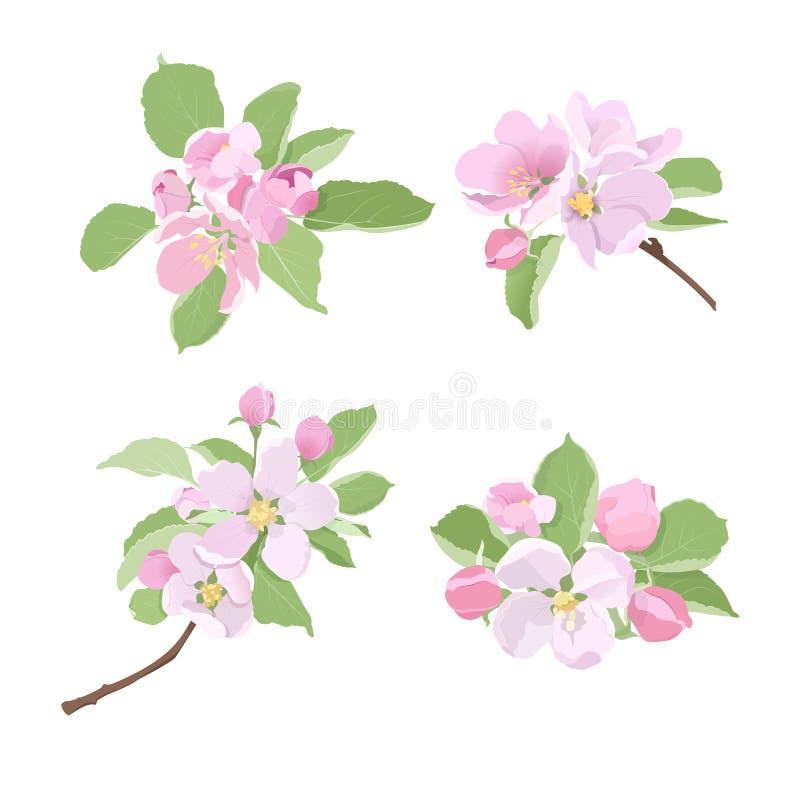 与花和芽的进展的苹果树分支 库存例证