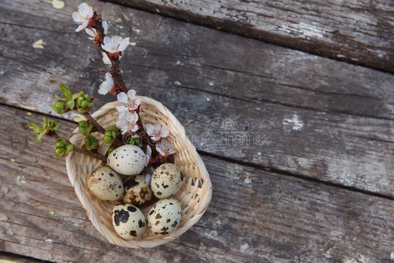 与花和鹌鹑蛋的复活节快乐 免版税库存图片