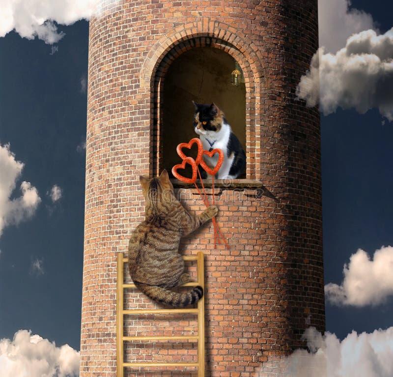 与花束的猫上升到他的恋人 免版税库存图片