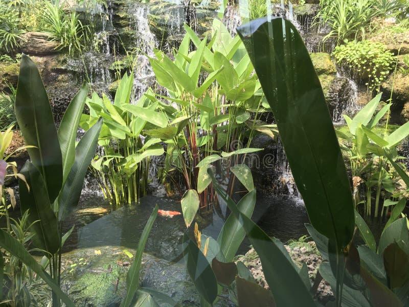 与花梢鲤鱼或小井鱼的热带石瀑布和热带植物 免版税库存图片
