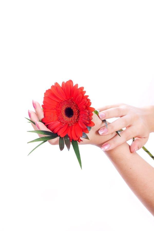 与花的修指甲反射 图库摄影
