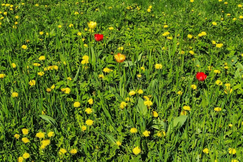与花的域 库存照片