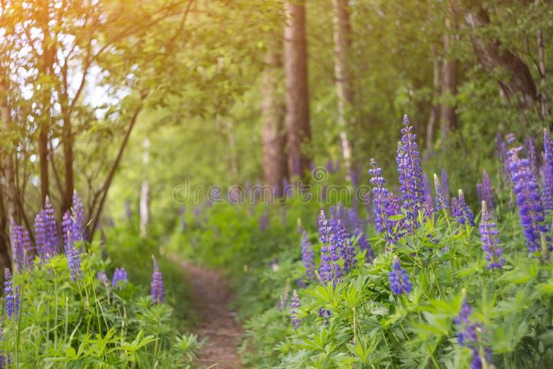 与花的夏天风景在草甸在森林里 免版税库存照片