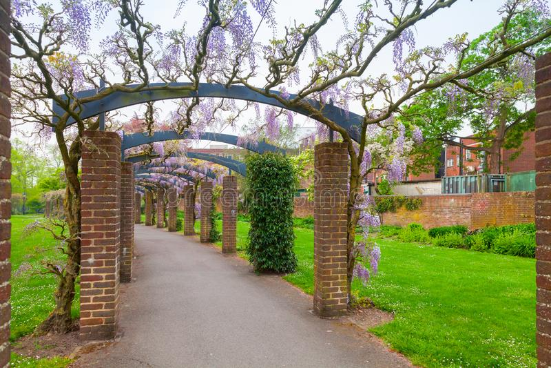 与花的室外拱廊,南安普敦 库存照片