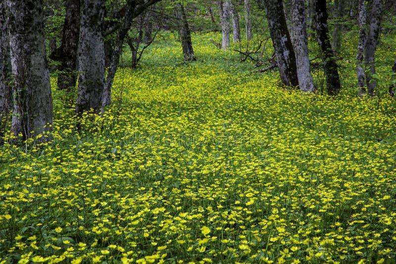 与花的春天木头在克里米亚 免版税库存图片