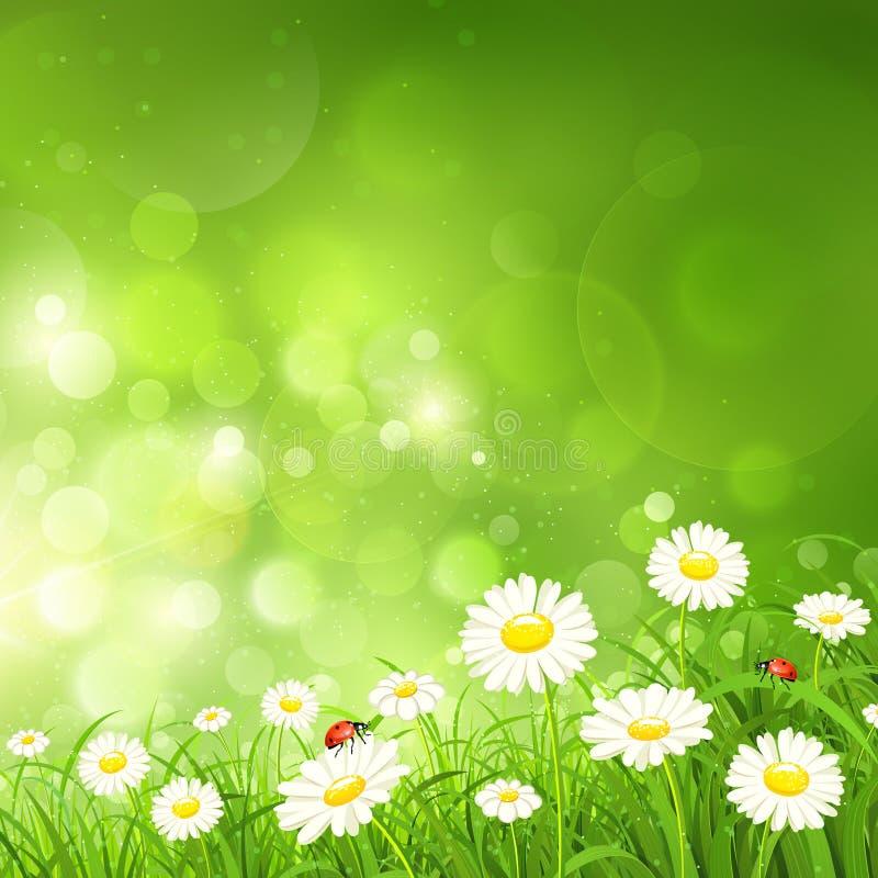 与花的春天背景 向量例证